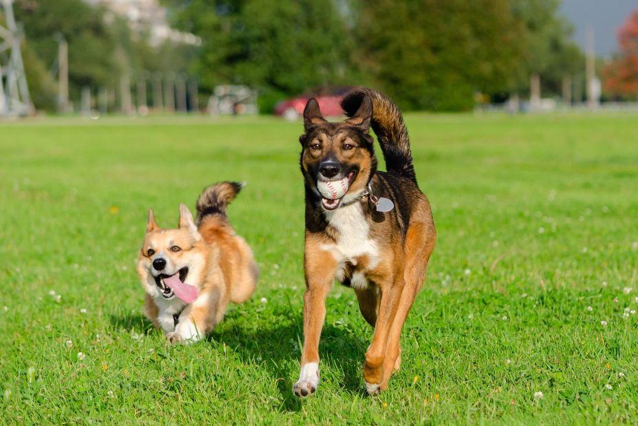 ¿Coges a tu perro en brazos por la calle? Debes evitarlo. Foto: bigstock