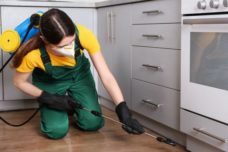 Trucos para eliminar insectos de la cocina y evitar que vuelvan